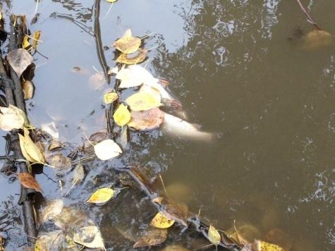 ЭРА: версия рязанских властей о причинах гибели рыбы в Лыбеди плохо стыкуется с фактическими данными о погоде