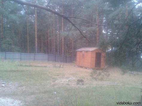 Облсуд подтвердил, что сотрудница рязанской Госжилинспекции владела землей в Сумбулово незаконно