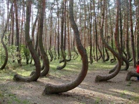 Канал ТВЗ заинтересовался «аномальным лесом» в Шиловском районе 1_4032