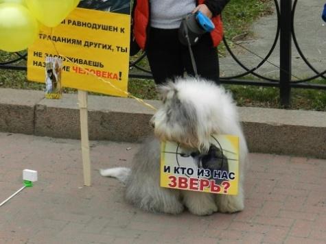 Администрация Рязани сообщила о проведении акции по принятому плану о бездомных животных 1_6699